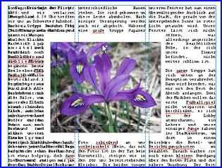 83 serifpp_textimblocksatz