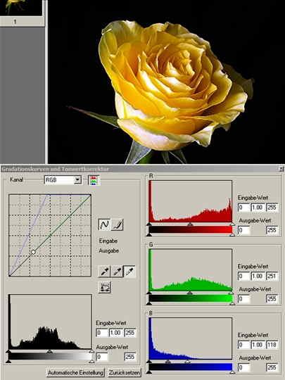 11 Rose 2 weisse Pipette auf hellste Stelle-.jpg