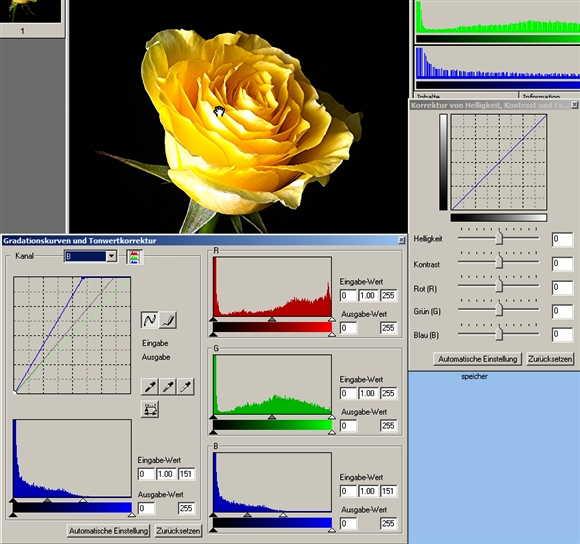 12 Rose Histogramm blauausgleich-.jpg