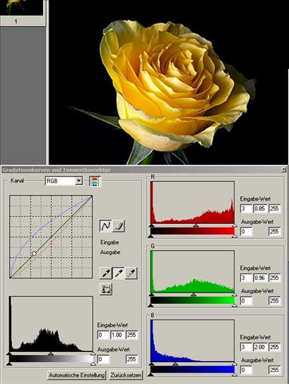 13 Rose mittlere Pipette auf dunkles gelb-.jpg