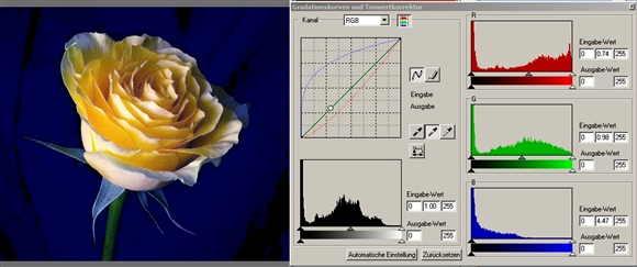 14 Rose mittlere Pipette auf mittleres Gelb-.jpg