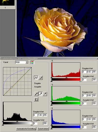 15 Rose mittlere Pipette auf mittleres gruen-