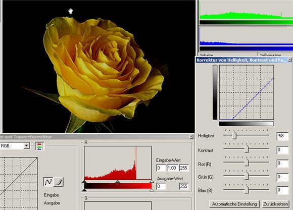 16 rose-
