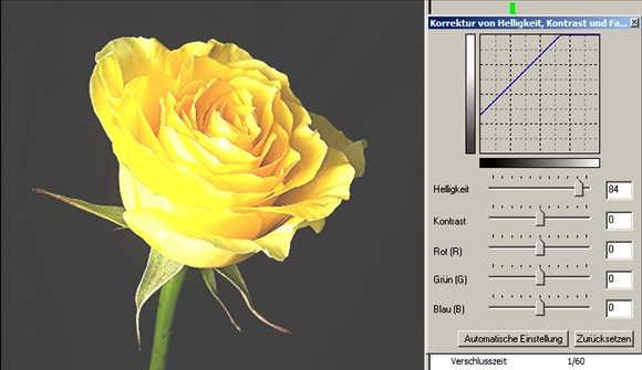 17 Rose Helligkeit auf helll-