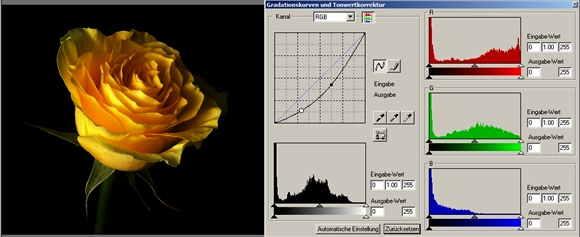 18 rose Gamma dunkler-