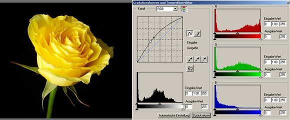 19 rose Gamma heller-