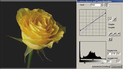 28 rose weniger Kontrast-