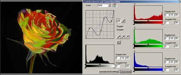 30 rose Filter 2-